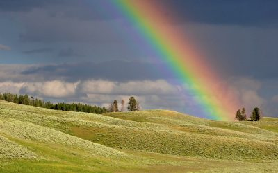 Lament & A Rainbow Promise for All