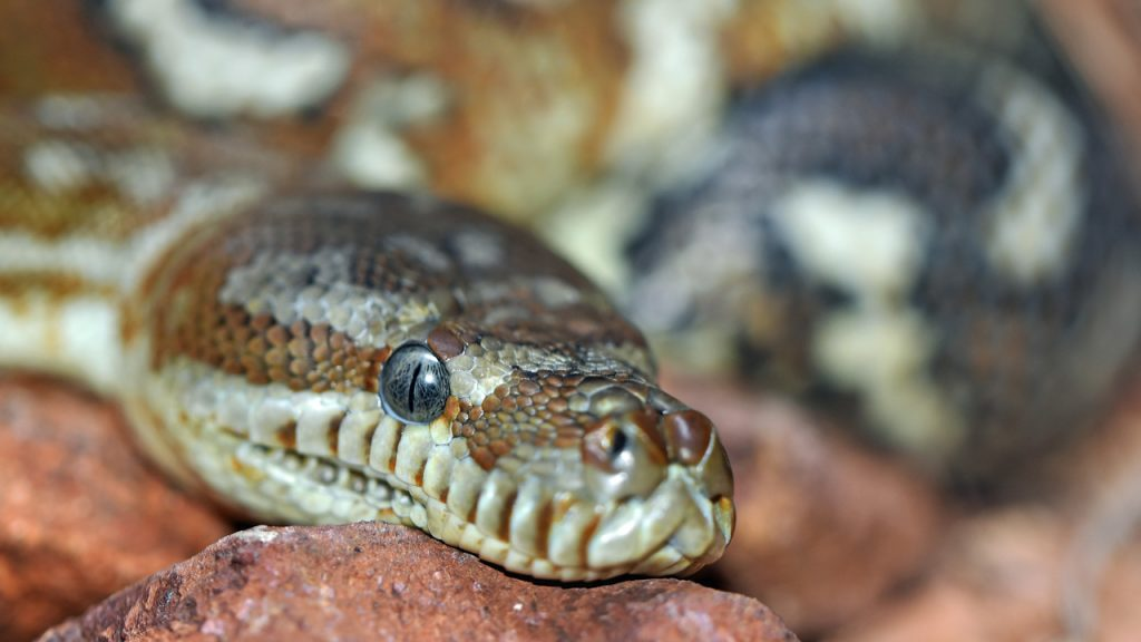 Sermon: A Slithering Slew of Venomous Vipers