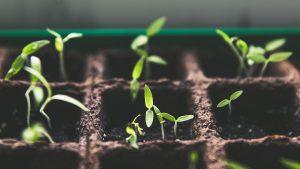 Sermon: Seeds Grow