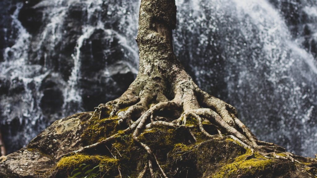 Sermon: Roots for Windstorms