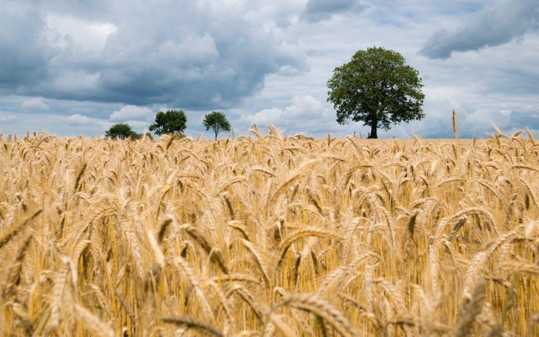 Weeds, Wheat, & Yeast
