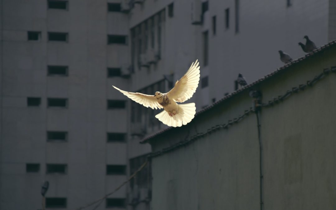 Holy Spirit, Come with Power!